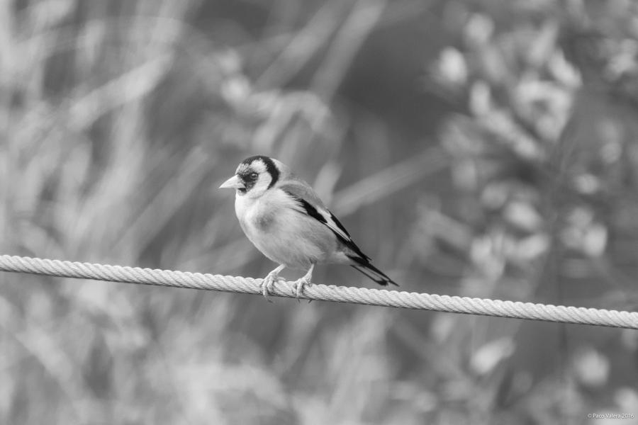 birdscapes-2