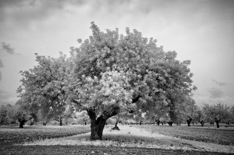 carobtree5