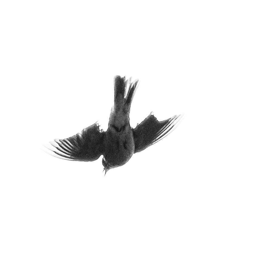 Birds1