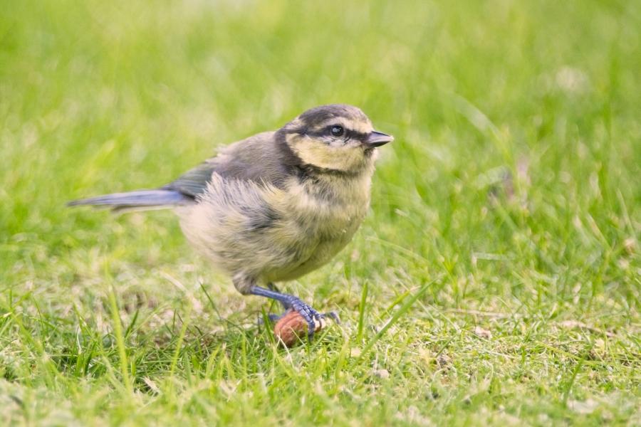 Garden Birds2