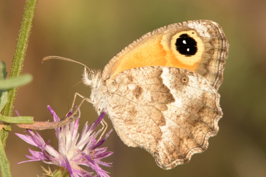 Butterfly-29