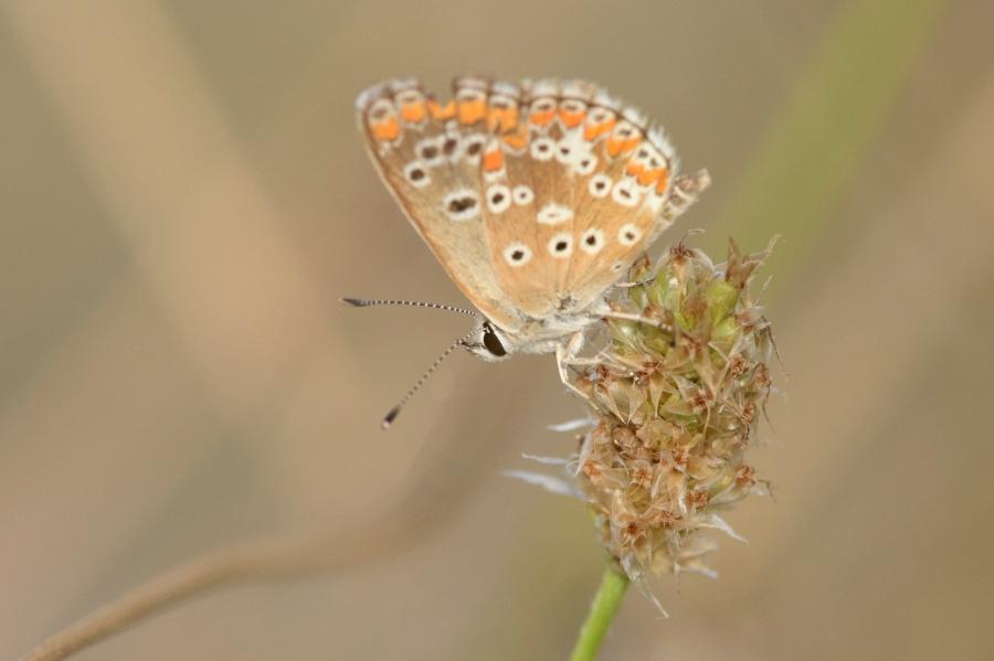 Butterfly-38