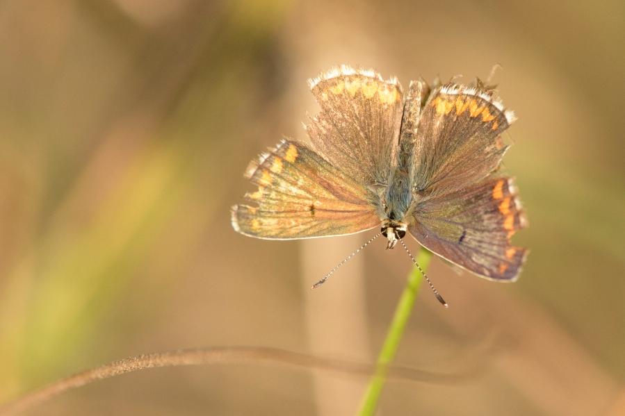 Butterfly-39