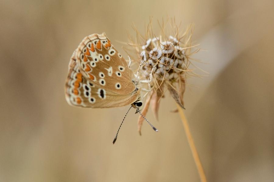 Butterfly-40