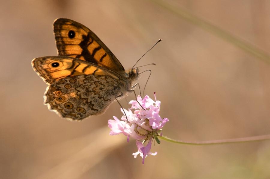 Butterfly-41
