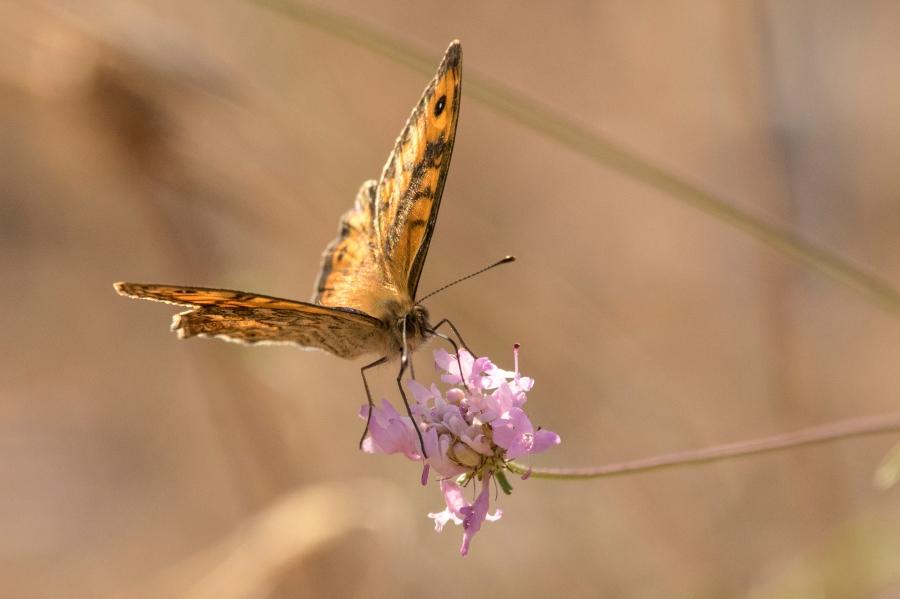 Butterfly-42