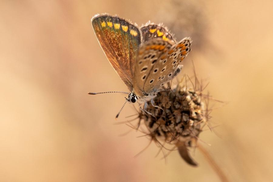 Butterfly-43