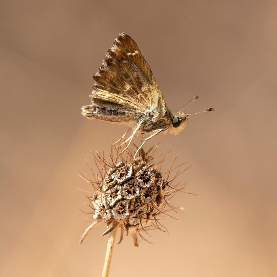 Butterfly-44