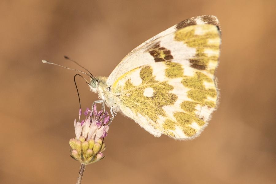Butterfly-53
