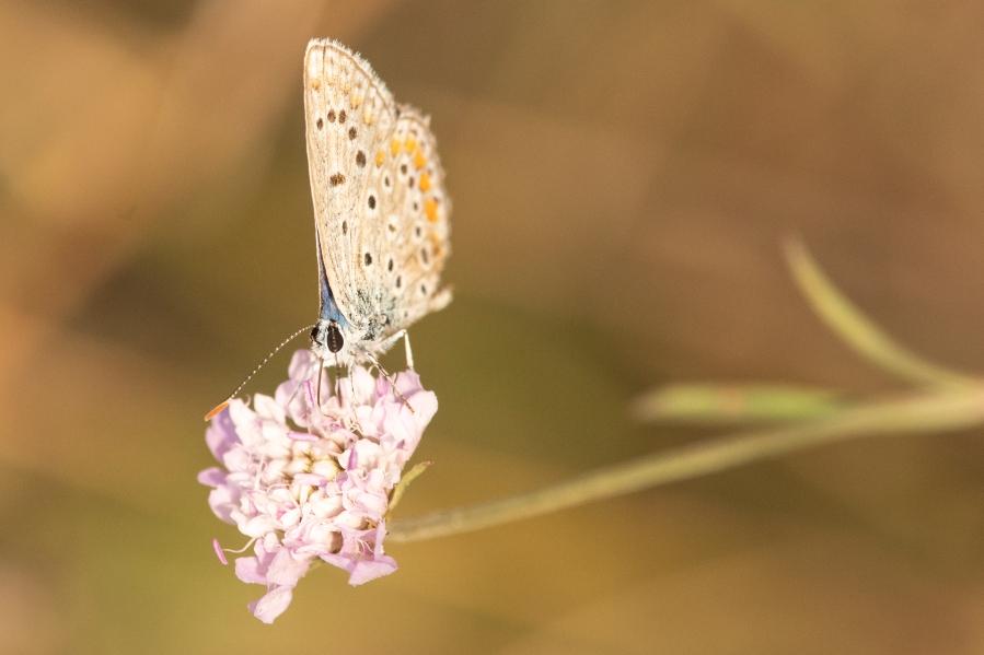 Butterfly-56