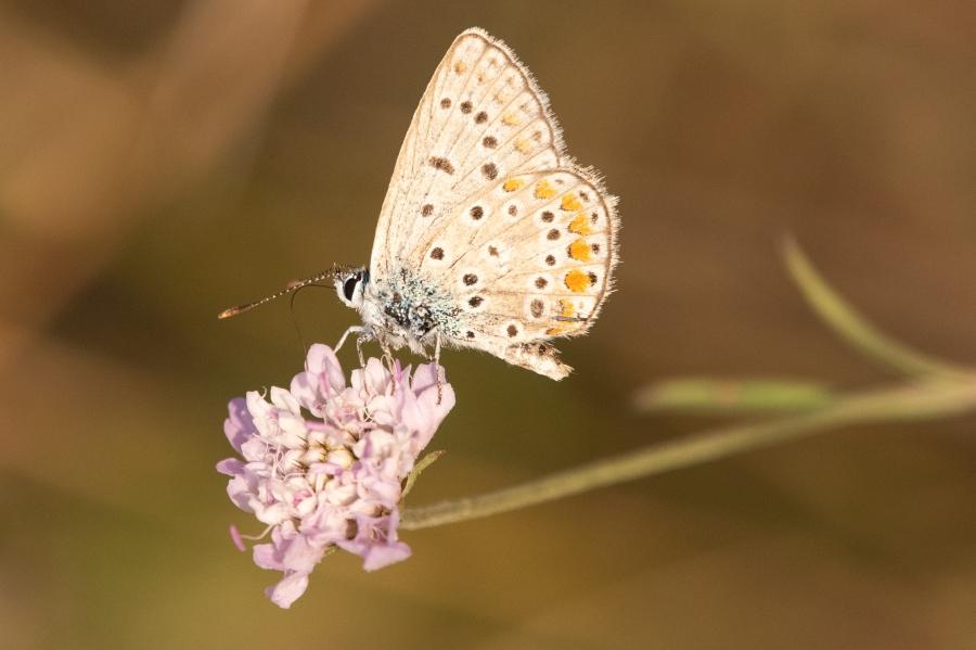 Butterfly-58